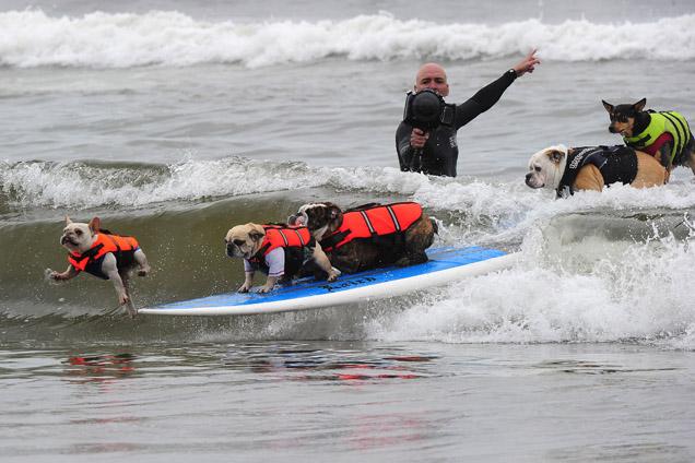 Surfistas de quatro patas fazem-se às ondas