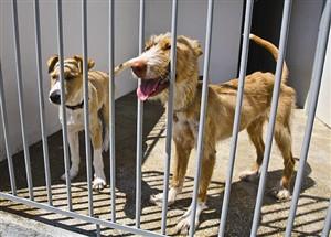Cinco condenados por tráfico de cães na Tailândia