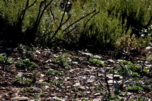 Desertificação avança 317 campos de futebol por dia
