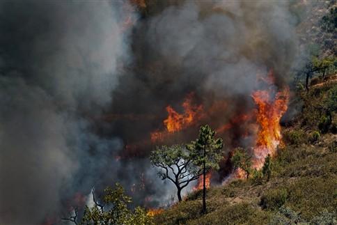 Novo incêndio com uma frente em Loulé mobiliza dezenas de homens
