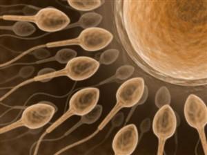 Cientistas criam esperma em laboratório