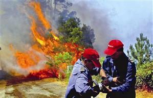Doze fogos florestais continuam activos no norte