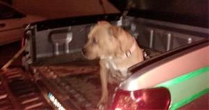 """Ataque de cão """"Pitbull"""" deixa criança ferida com gravidade no rosto"""