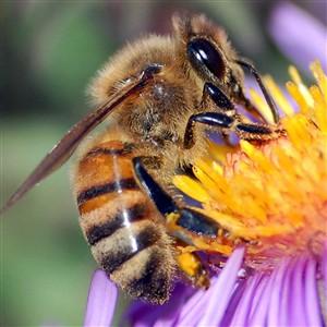 76 monges atacados por enxame de abelhas