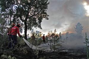 Presumível incendiário detido pela PJ em Montalegre