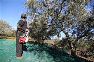 GNR fiscaliza lagares de azeite e previne roubos de azeitona