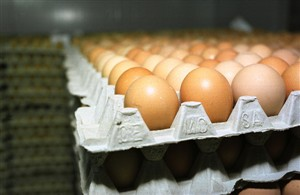 Jovem morreu depois de comer 28 ovos crus em aposta
