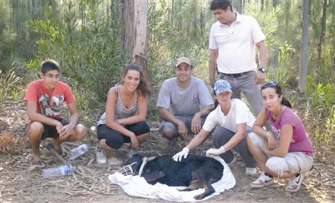 Voluntários salvam cadela deixada numa berma com tiro na nuca