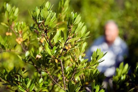 Produtos portugueses como medronho ou carolo de milho vão ganhar nova vida