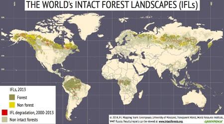 Greenpeace: 100 milhões de hectares de florestas selvagens em «chocante degradação»