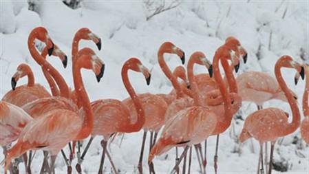 Neve na China cria paisagens de sonho (vídeo)