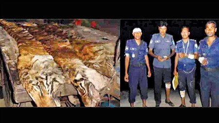 Polícia do Bangladesh mata seis caçadores de tigres
