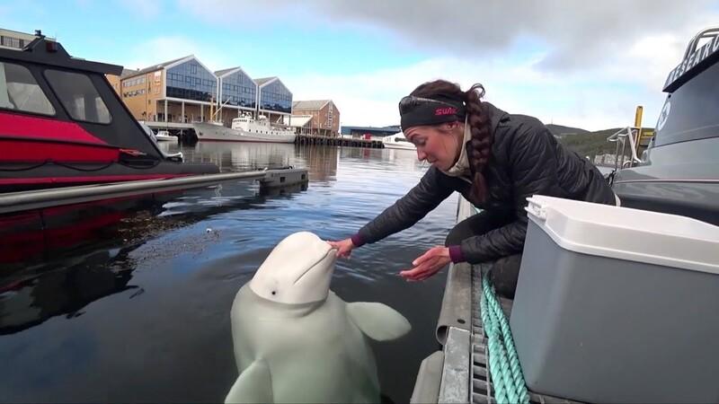 Golfinhos e baleias valem milhões de euros e ajudam a abrandar as alterações climáticas