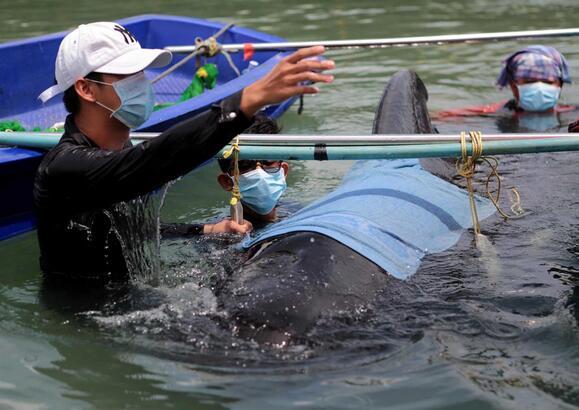 Resultado de imagem para Baleia morre depois de engolir mais de 80 sacos de plástico no mar da Tailândia