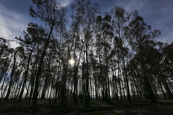 Resultado de imagem para Figueira da Foz desenvolve app inédita para gerir limpeza florestal