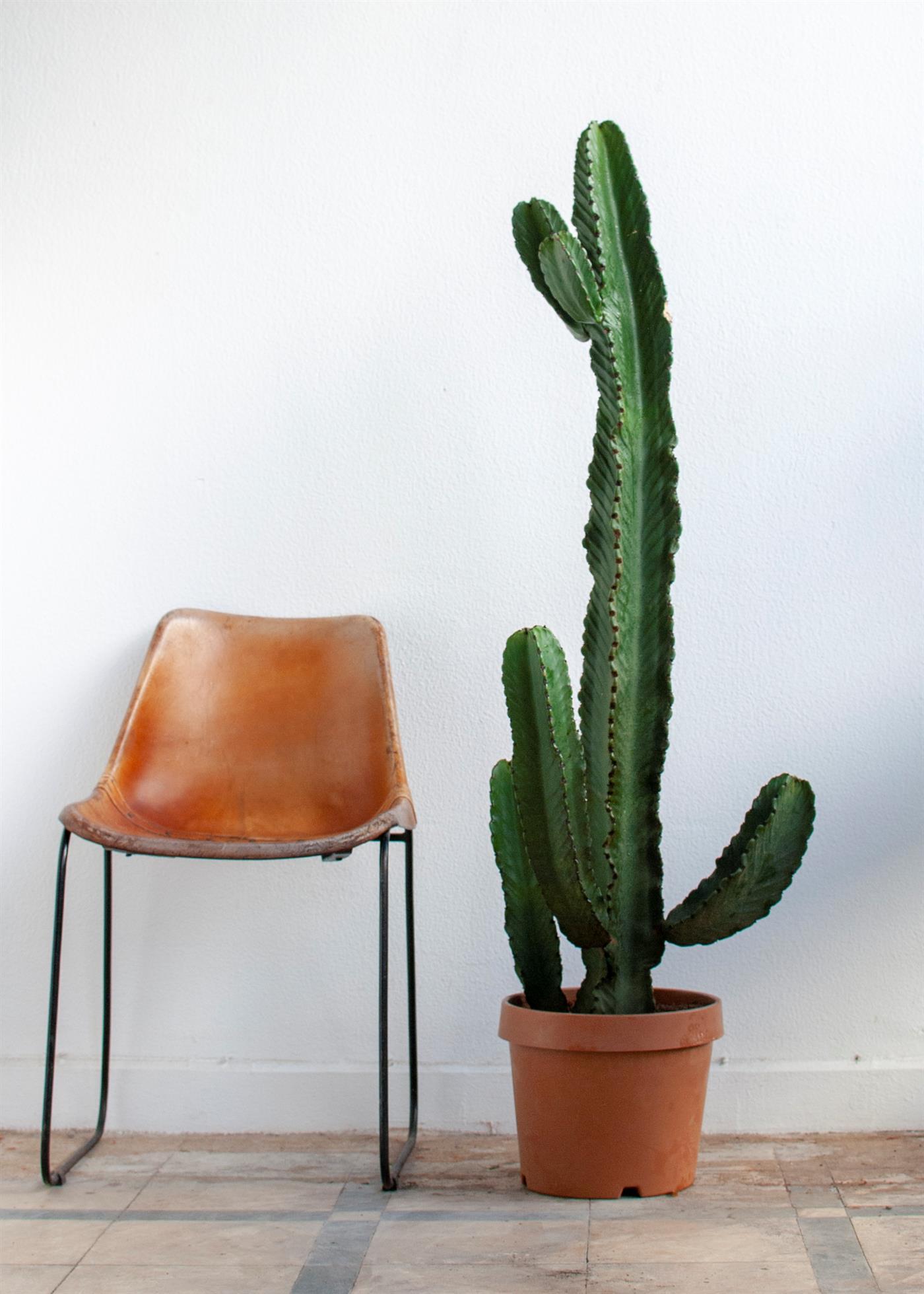 Si el espacio no tiene mucha luz, los cactus y las suculentas son buenas opciones, dice Márcio Orsi da Silva