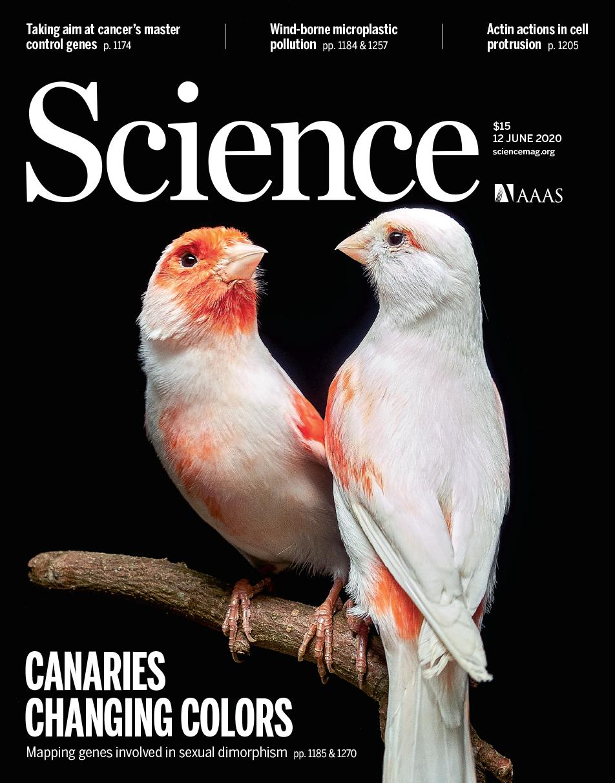 A descoberta das aves na Universidade do Porto é capa da revista científica