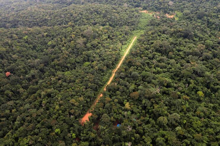 Floresta amazónica perdeu 10% da vegetação nativa em 33 anos