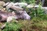 Um dos animais mortos por lobos