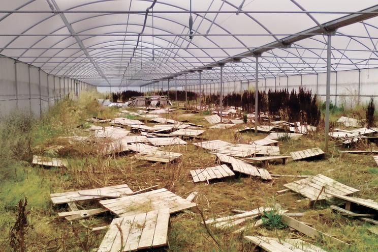 Estufas de produção de caracóis, em Condeixa