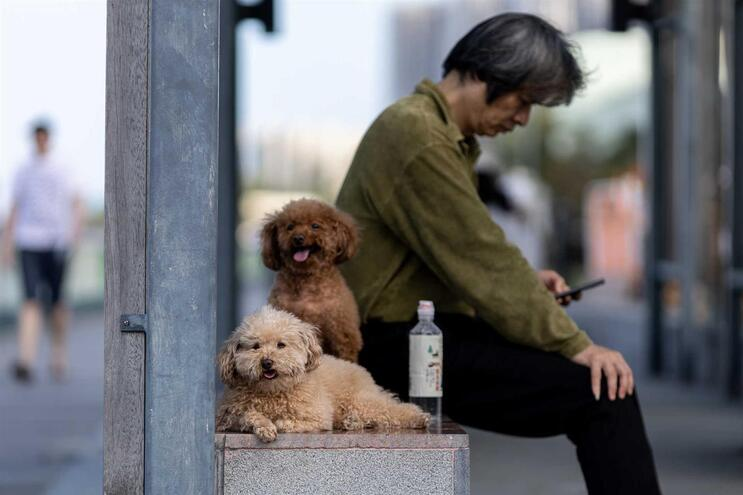 Os animais requerem todos os cuidados, ainda mais em ambiente doméstico, porque podem ser portadores