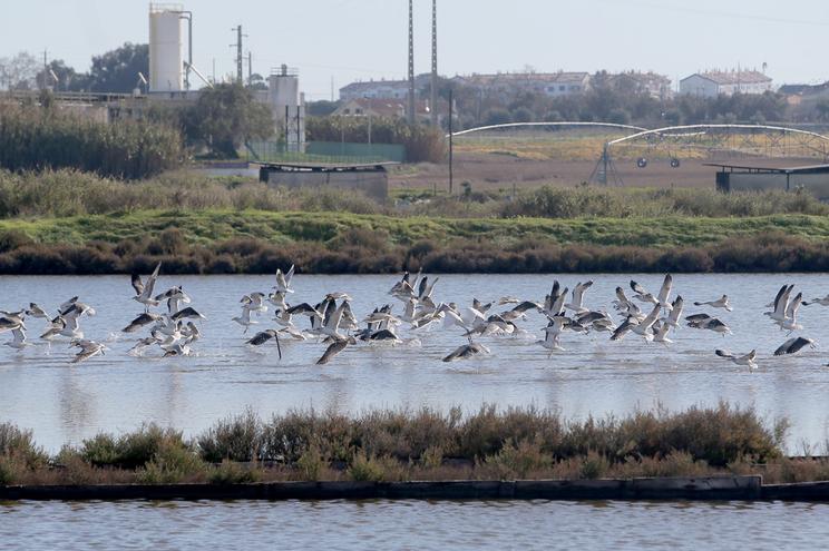 ANA considera impactes na fauna e flora pouco significativos