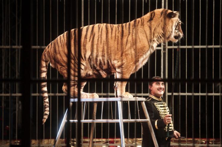 Porto proíbe números artísticos com animais no circo