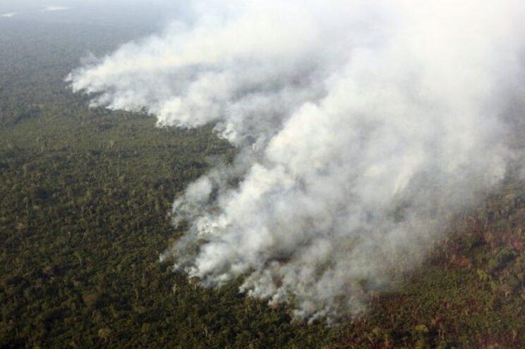 """""""Estamos perto do holocausto da floresta"""", diz ativista ambiental na Amazónia"""