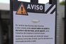 Ninho de vespas asiáticas obriga a fechar parque em Lisboa