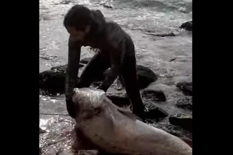 Apanhado peixe com 58 quilos em São Pedro de Moel