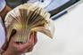 Mais de três dezenas de bancos da UE utilizam paraísos fiscais de baixo imposto ou imposto zero