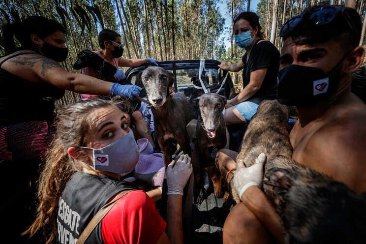 Dezenas de animais de dois abrigos ilegais morreram em fogo na Serra da Agrela