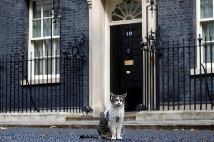 Larry the cat, o gato que vive em Downing Street