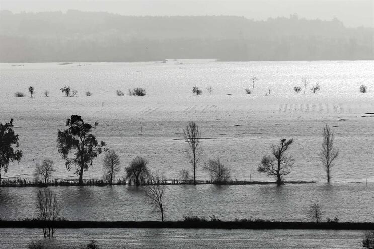 Diques do Mondego deverão ser reparados em dois meses