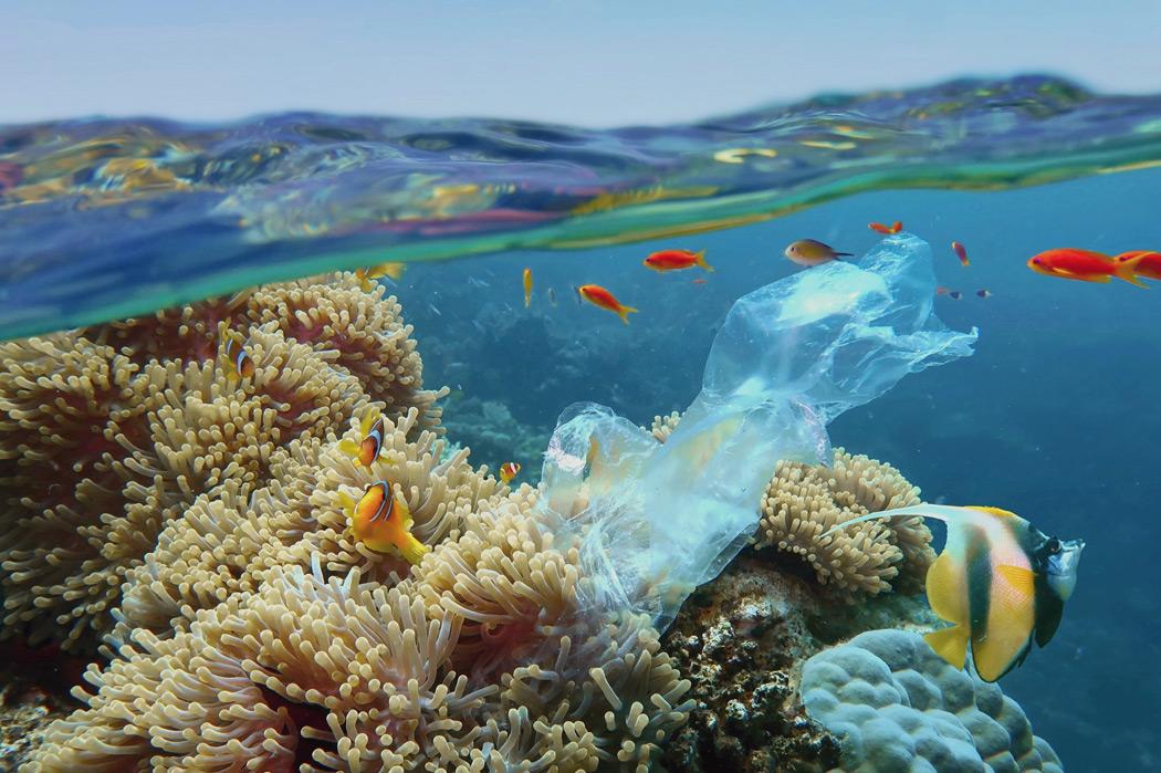 Vamos proteger os nossos Oceanos?