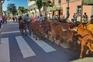 A Câmara Municipal de Terras de Bouro prepara já a inscrição da Subida da Vezeira no Inventário do Património
