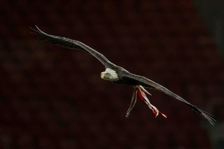 Benfica SAD registou lucro