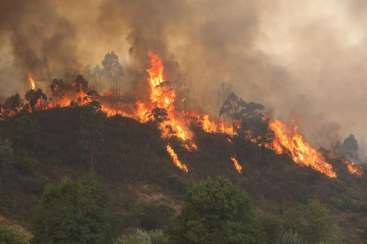 Quercus diz que perigosidade do fogo de Monchique deve-se sobretudo a eucaliptos