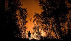 Primeira página em 60 segundos: Número de incendiários e de fogos cai para metade