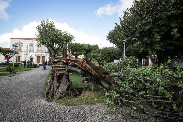 Estragos após a passagem da tempestade Leslie em Soure, Coimbra