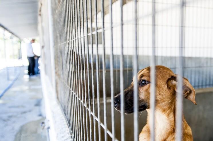 Novo centro de recolha para mais de 50 animais
