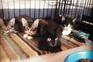 Animais da Associação Zoófila Casa Esperanza Focinhos já foram alvo do casal