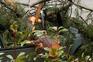 Queda de árvores deixa família desalojada em Santo Tirso