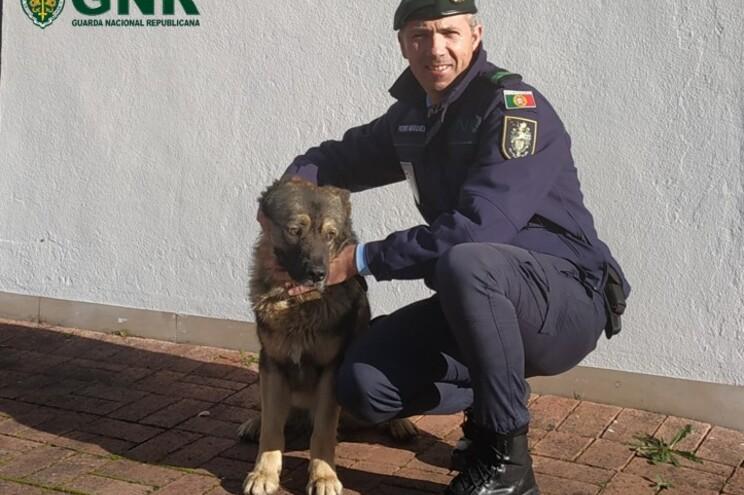 Cão ficou à guarda da Guarda até que o dono o foi buscar