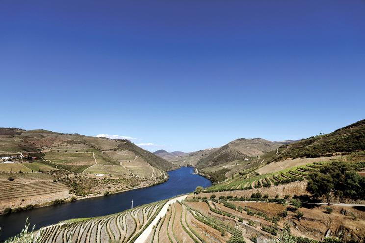 Clima faz crescer  produção de vinho