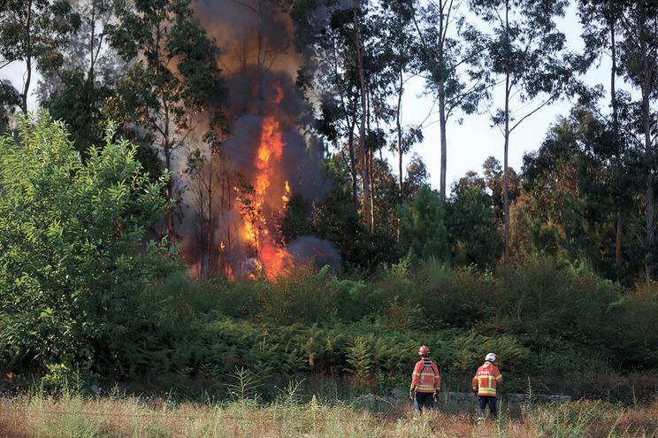 Incêndios atribuídos a bombeiro de Alfândega da Fé destruíram 110 hectares