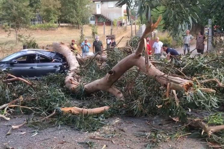 """O eucalipto vai agora ser alvo de uma intervenção de """"poda seletiva de manutenção"""""""