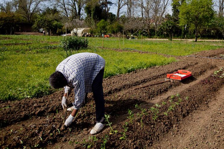 Em causa, nove milhões de despesas agrícolas declaradas entre 2010 a 2012