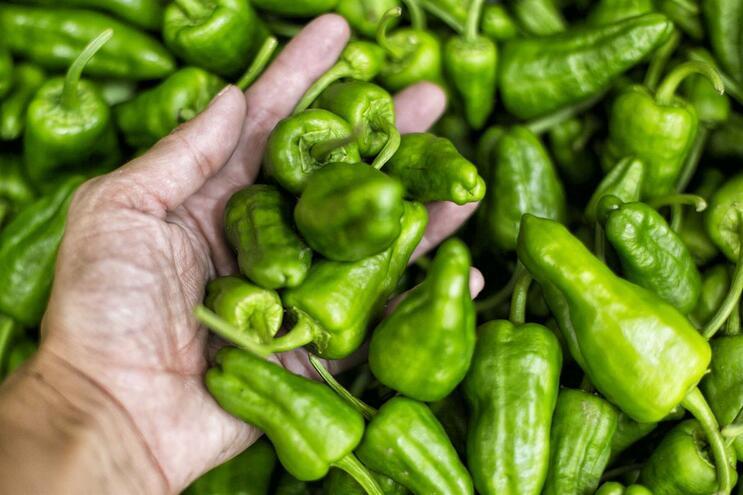 Governo vai apostar no aumento da agricultura biológica