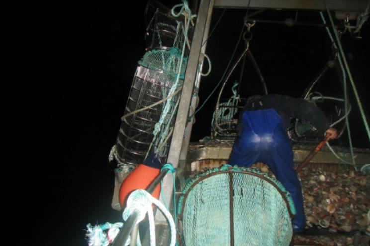 Polícia Marítima apreende 250 quilos de bivalves em Setúbal